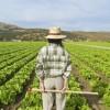 L'agricoltura dà lavoro