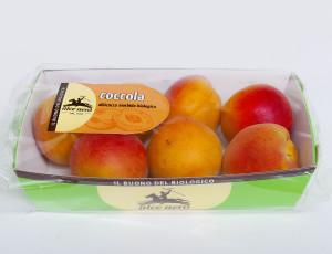 Albicocca Coccola Alce Nero