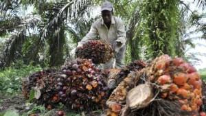 olio di palma-k